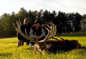 Trophy Red Stag